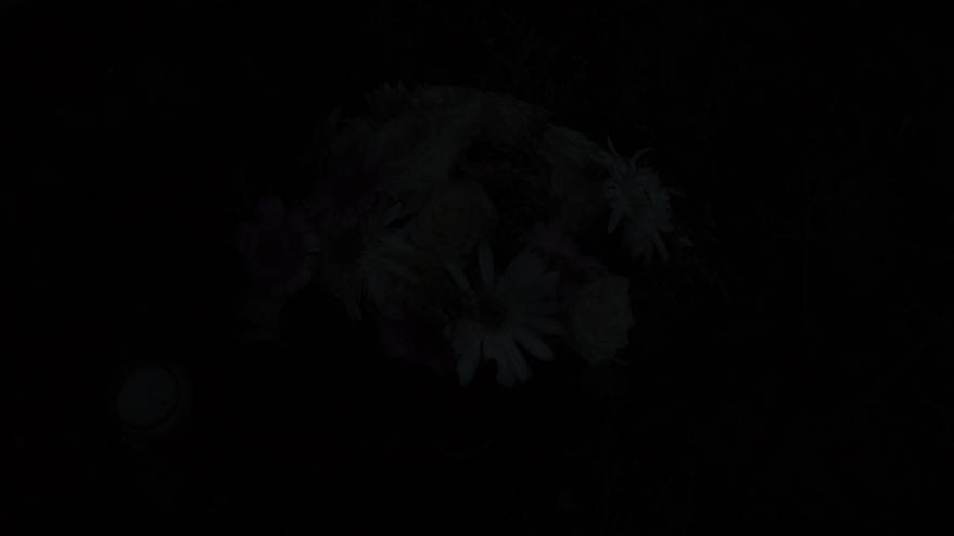 flowers for shannon archer