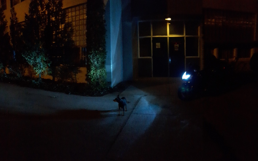 the dog, the bike, and the elementary school.jpg