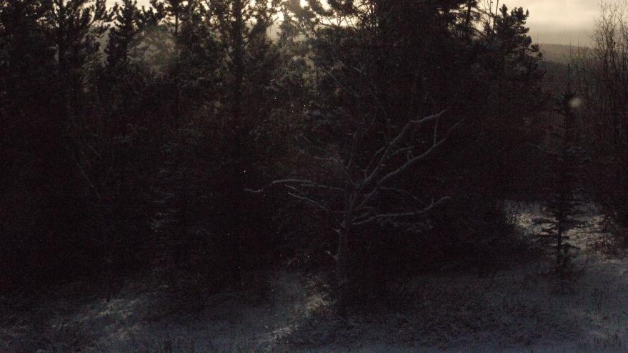 birch shimmers ll