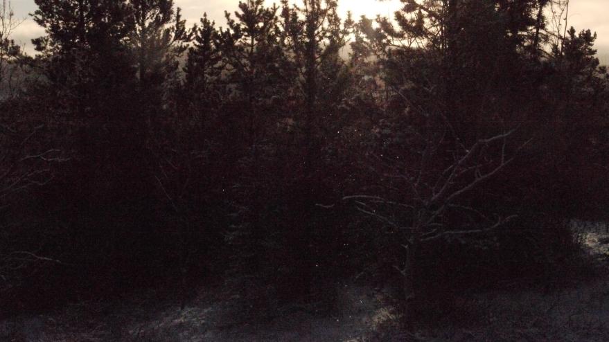 birch shimmers l