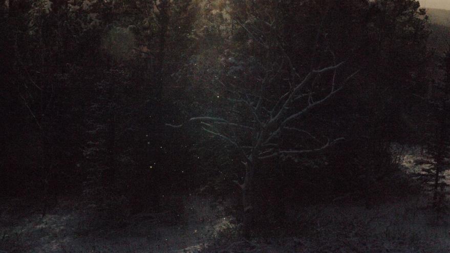 birch shimmers lll