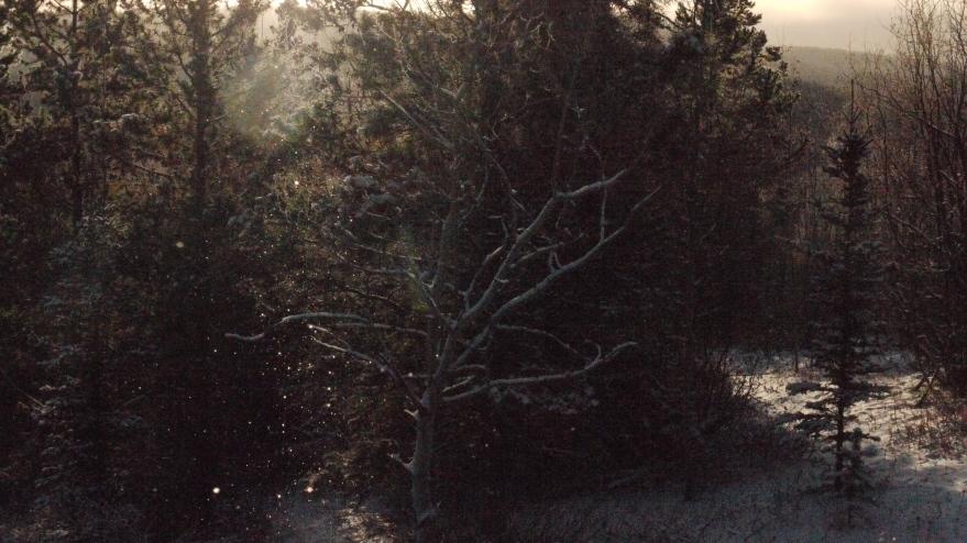 birch shimmers llll