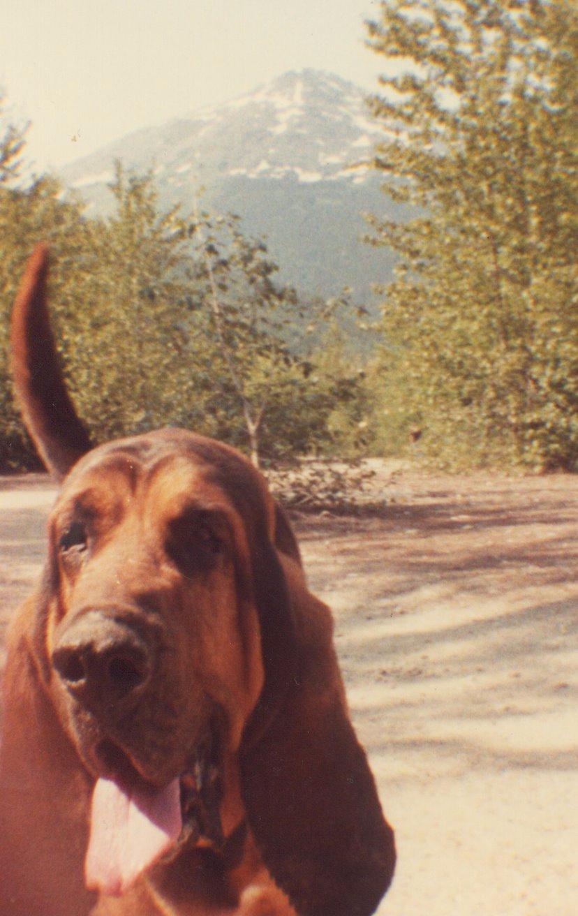found-dog-lll.jpg