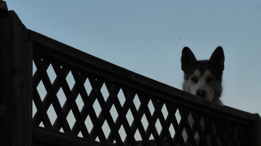 my-dog-king